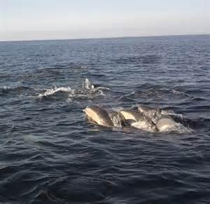 Cape Cod Canel