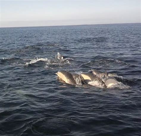 November Fishing On Cape Cod Report