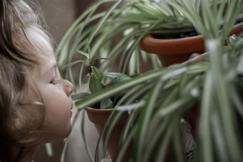 Pflanzen Im Kinderzimmer by Pflanzen Im Kinderzimmer Gr 252 Nlilie