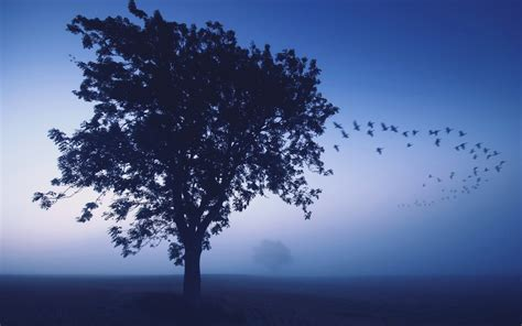 Blue Tree Wallpaper by Blue Tree Sky Field Birds Wallpapers Blue Tree Sky