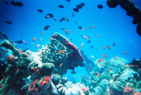 Definition of habitat in the definitions.net dictionary. Marine ecosystem - Wikipedia