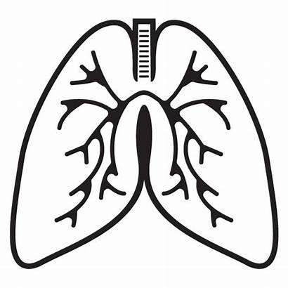 Lungs Lung Clipart Outline Cliparts Clip Human