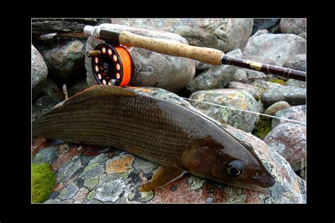 fliegenfischer forum fliegenfischen  norwegen  der