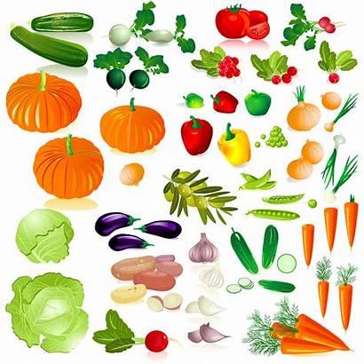 Vegetables Vector Dibujos Frutas