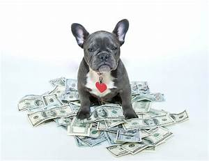 cost of owning a dog averages most expensive breeds With dog sitting cost