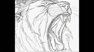 Drawing A Lion -  U0026quot Mumbai Growl U0026quot
