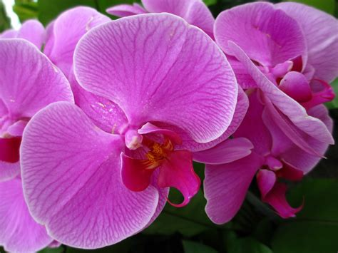 information of orchid flower orchid facts orchid facts for the trivia lover in you orchid bliss 10 facts about orchids