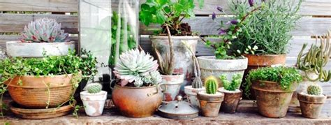diy how to age terracotta pots palmers garden centre