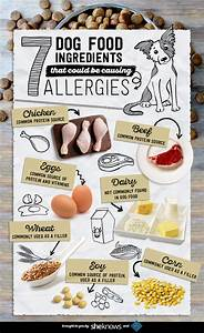 canine food allergies With dog food allergy symptoms