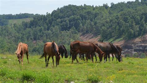 horses kentucky eastern roaming hills horse kayla caudill kotrba living highlands graze batesville inc website