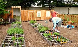 Pros And Cons Of Organic Vegetable Seeds Whats The