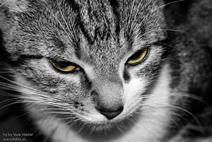 Schwarz Weiß Bilder Tiere : bild von der katze katzen forum ~ Markanthonyermac.com Haus und Dekorationen