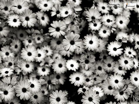 black and white black and white flower wallpaper wallpapersafari