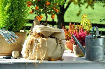 Pflanzen Winterfest Einpacken by Garten Winterfest Machen Kleine Checkliste