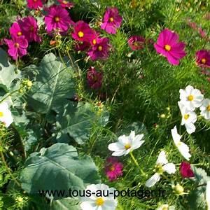 Plantes Amies Et Ennemies Au Potager : plantes compagnes tous au potager apprenez jardiner bio ~ Melissatoandfro.com Idées de Décoration