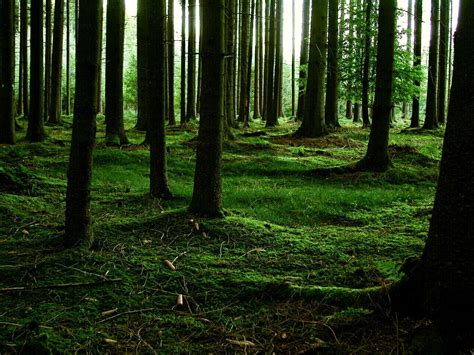 Wallpaper And Backgrounds Forest Wallpapers And Backgrounds High Definition All