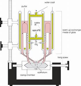 Ussing-chambers with connected warm-up exchanger and ...