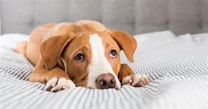 Comment Savoir Si Son Catalyseur Est Bouché : comment savoir si son chien est malade blog animaux chiens et autres ~ Gottalentnigeria.com Avis de Voitures