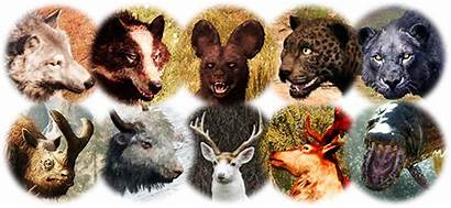 Animals Rare Skins Taming Community Oros Hunting
