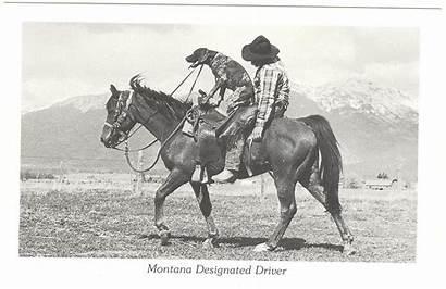 Designated Driver Postcards Friends Friend Montana Funny