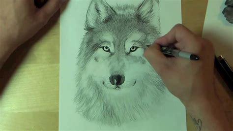 wie zeichnet man einen wolf   draw youtube