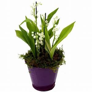 Quand Planter Du Muguet : le muguet fleur de printemps traditions et plantationle blog fleursinfo ~ Melissatoandfro.com Idées de Décoration