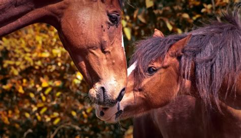 behavior breeding horses wild mares stallion forced farms stallions dominant complete animal