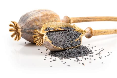 recette de cuisine facile et rapide dessert graines de pavot épices huiles et condiments