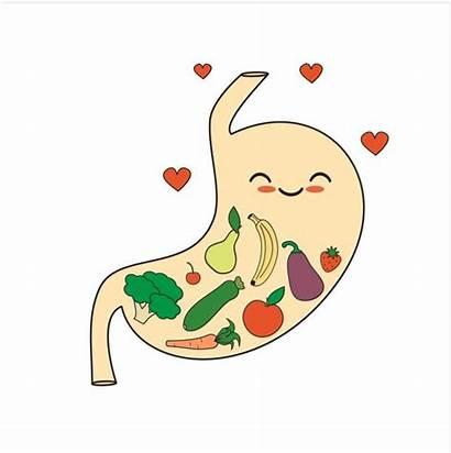 Stomach Cartoon Happy Clipart Healthy Clip Vector