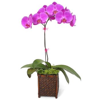 how do i care for an orchid after it blooms image gallery orchid flower care