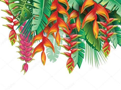 tropical plants  heliconia flowers stock vector