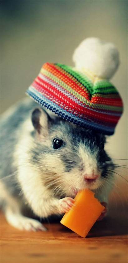Hamster Wallpapers Pet Galaxy Pc Meng S8