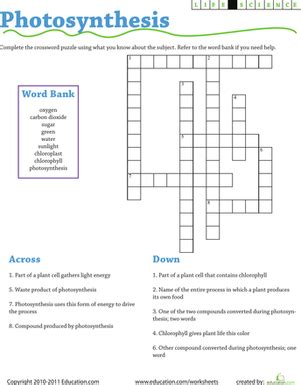 life science crossword photosynthesis worksheet education