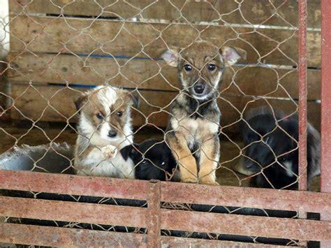 tierheimhilfe rumaenien