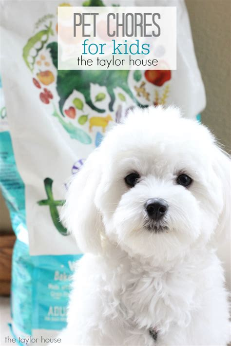 printables pet care  taylor house