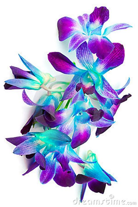 purple  green orchids stock photography image
