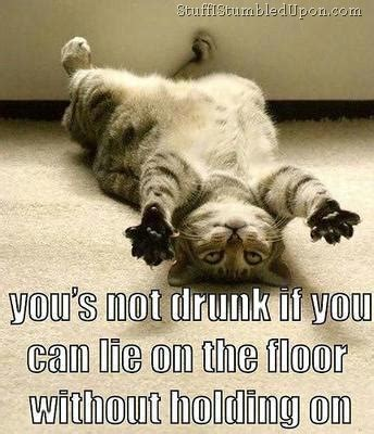 Drunk Cat Meme - why does drinking make me feel good why do i do that