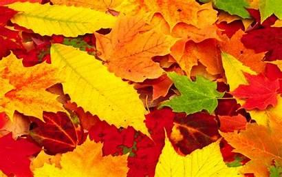 Leaves Autumn Wallpapers Desktop Fall Wallpapersafari Beckground