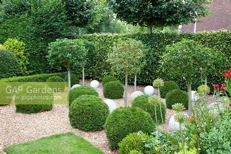 Gap Gardens  Small Topiary Garden With Clipped Ilex