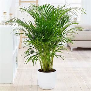 10, Best, Indoor, Air, Purifying, Plants, From, Nasa, Clean, Air, Study