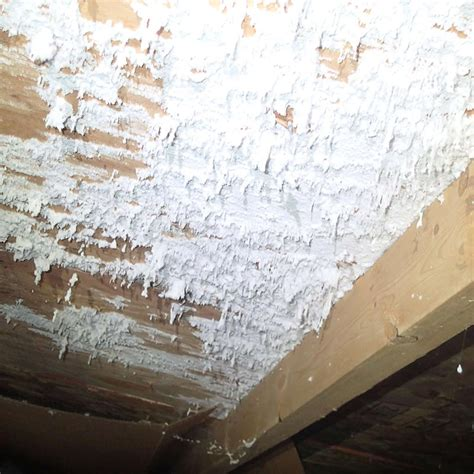 Black Mold Pictures Image Gallery  Mold Badger To The Rescue. Wooden Units Living Room. Pictures Of Modern White Living Rooms. Living Room Quotes For Wall. Living Rooms For Less. Curtain Valances For Living Room. Home Decor Small Living Room. What Color Should I Paint A Small Living Room. Green Color Schemes For Living Rooms