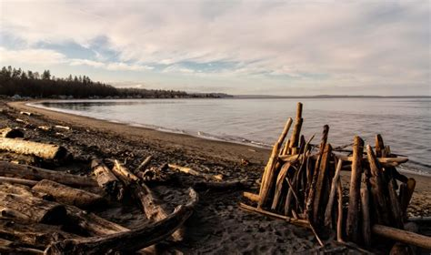 beaches washington driftwood beach point hansville wa things onlyinyourstate