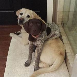 dogs sitting on other dogs is the cutest thing you39ll see With dog day sitting