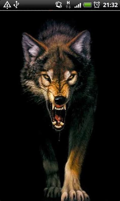 Angry Wolf Wallpaper Black by Best 25 Angry Wolf Ideas On Wolf Black Wolf