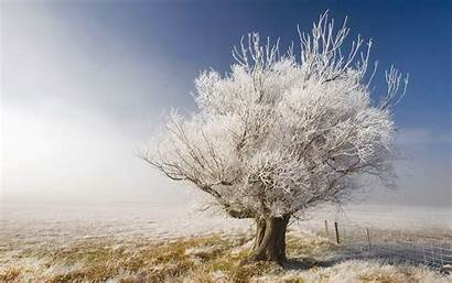 Tree Wallpapers Backgrounds Tag