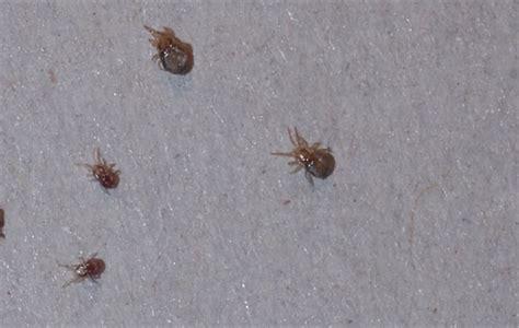 rid  mites    dangerous