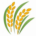 Rice Emoji Icon Sheaf Svg Icons Nature