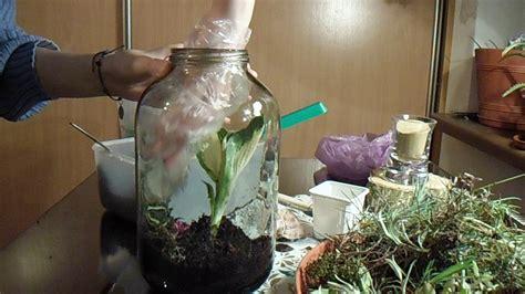 jak nauczyc sie zrobic las  sloiku florariumdiy youtube