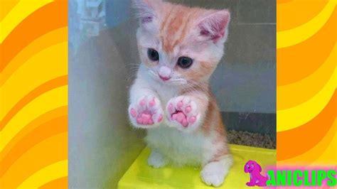 adorable kittens     fall  love youtube