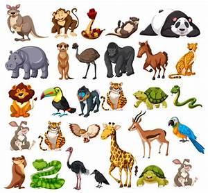 Diferentes tipos de animales salvajes en blanco ...